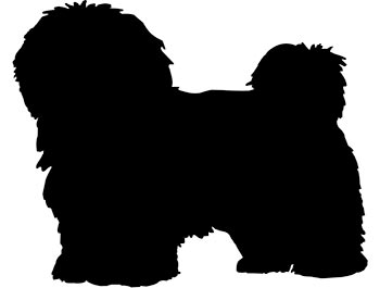 Havanese Puppies | Uls... Kate Hudson