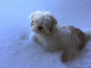 snow-dog-2